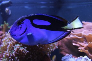 Unterwasserkamera Kaufratgeber 2016