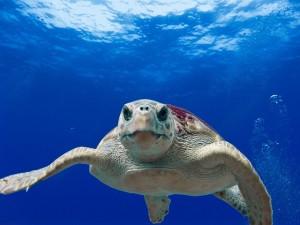 Unterwasserkameras Kaufratgeber